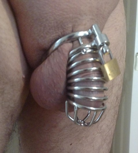 paladin cock cage silver 1